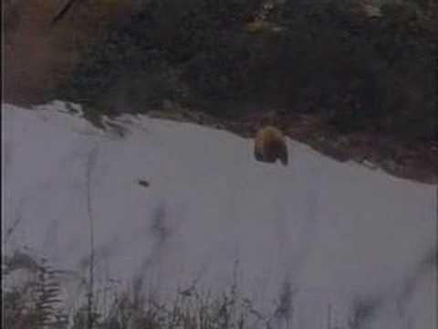 Grizzly lukem