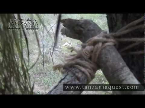 TANZANIE lov LVA