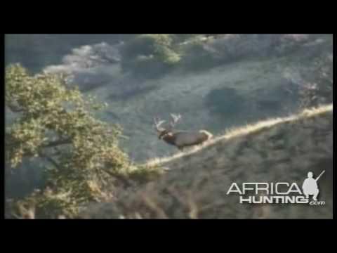 americké lovecké video