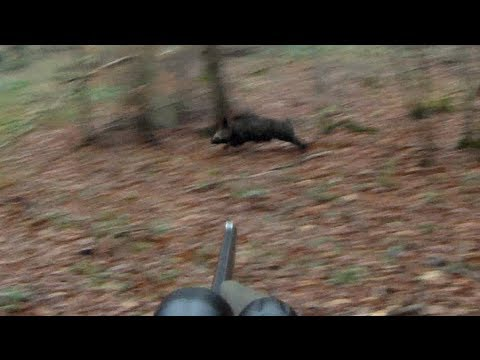 lov prasat – akční kamera
