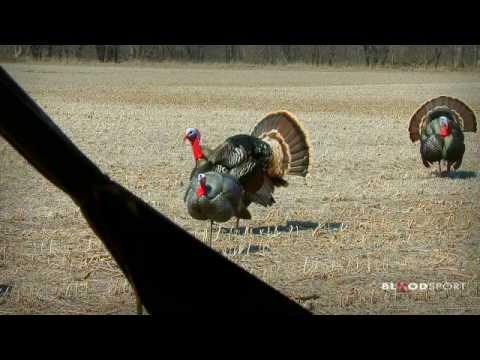lov krocanů LUKEM