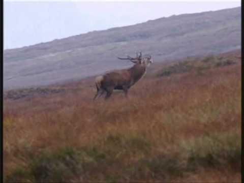 lov jelena Skotsko