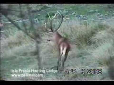 lov jelena v CHILE