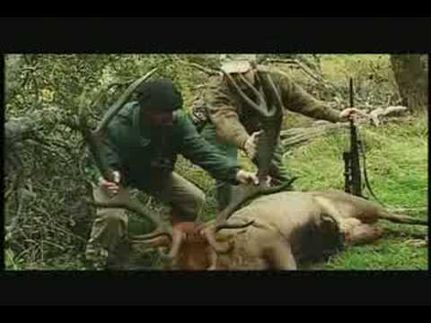 ARGENTINA – pořádný jelen