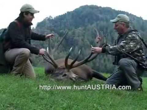 lov kapitálního jelena RAKOUSKO