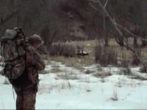 lov medvěda z blízka