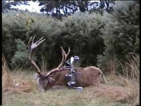 New Zealand – lov jelena IV
