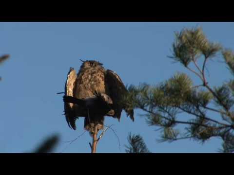 zajimavé video – zakázaný lov