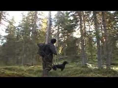 lov tetřeva