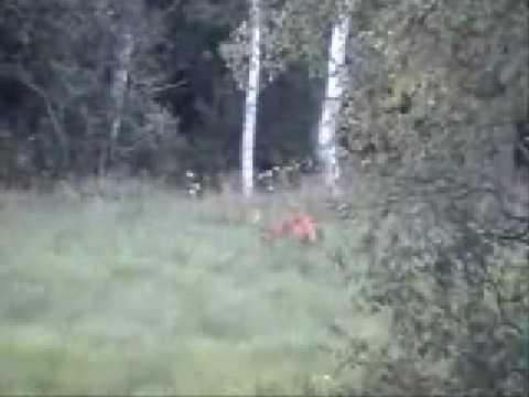 lov srnce II