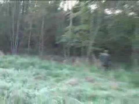 Jelen lov POLSKO