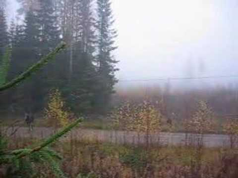 krasný lov losa Finsko