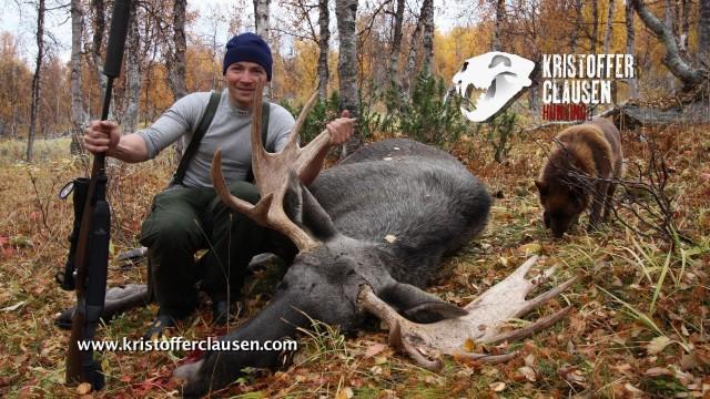 krásný lov losa