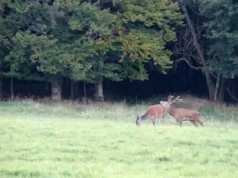 Lov mého jelena