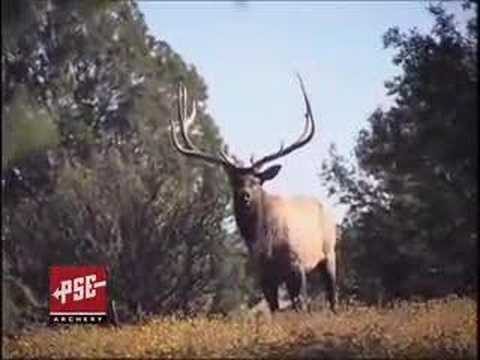 lov jelena WAP. lukem