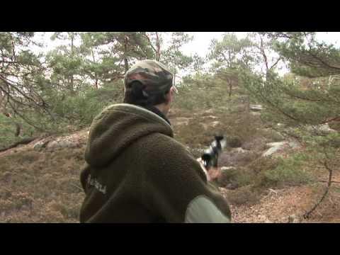 lov srnců