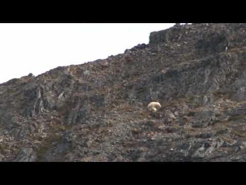 lov na Aljašce