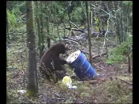 Lov medvědů na Aljašce