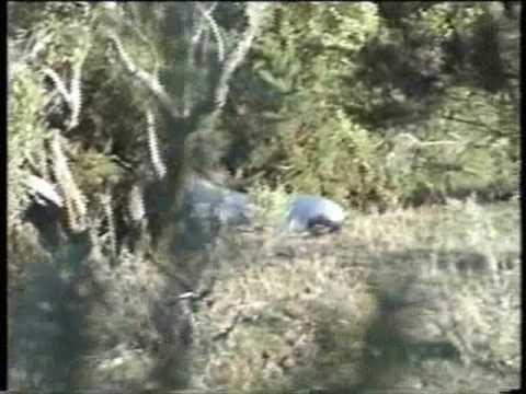 Lov jelena na Novém Zélandu VII