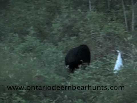 lov medvěda lukem