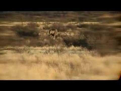 Lov v Africe Namibia