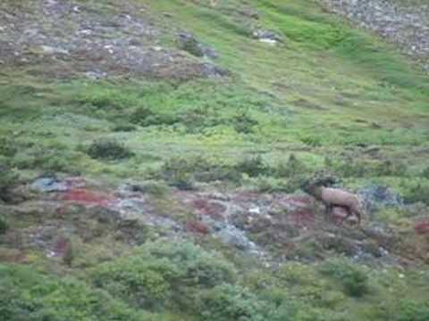 Lov jelena v Patagonii na 750 m
