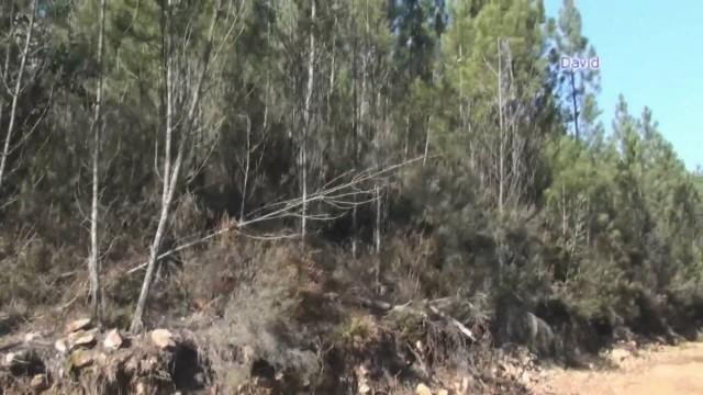 jak se loví v Portugalsku – prasata