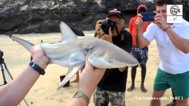 Lov žraloků z pláže na Kapverdských ostrovech