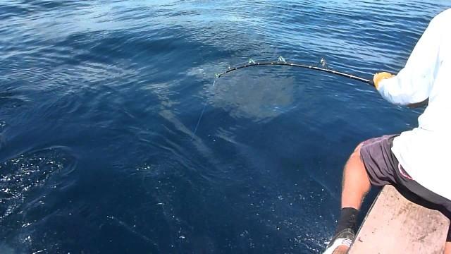 Češi loví žraloky