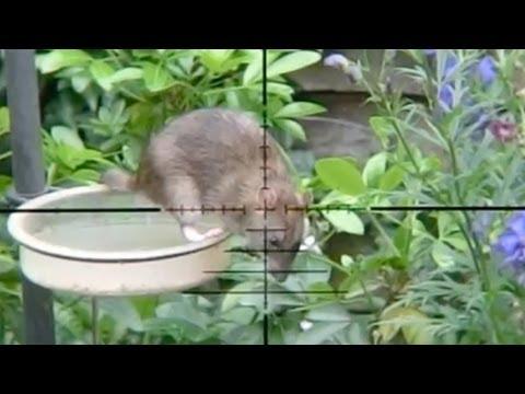 lov myší – zajímavé video