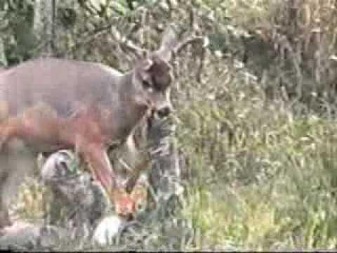 Nebezpečí lovu
