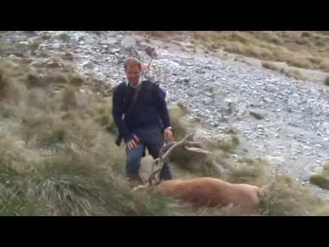 Ulovený jelen