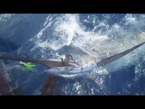 Blue Marlin fishing @ Cabo Verde : man against fish ;-)