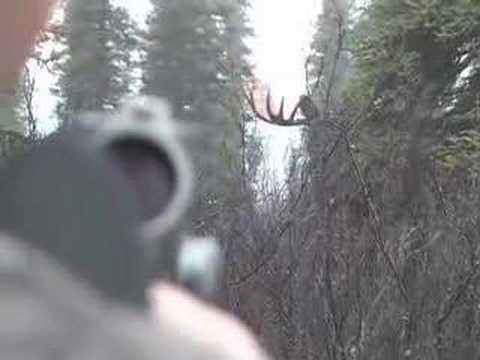 Lov pěkného losa
