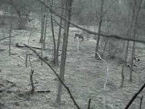 Jednou ranou dva jelenci