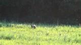 Vzrušující lov divočáků a vysoké zvěře