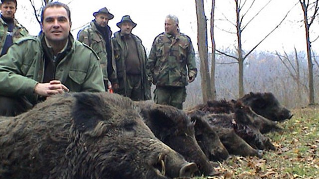lov prasat v Srbsku