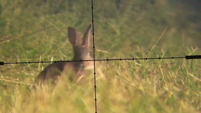 lov zajíců trochu jinak