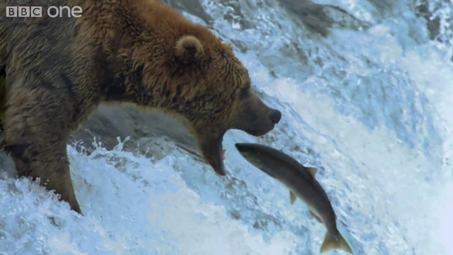 Medvědí lov