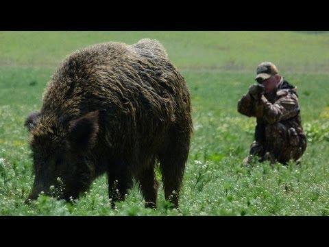 Lov obřího divočáka v Maďarsku