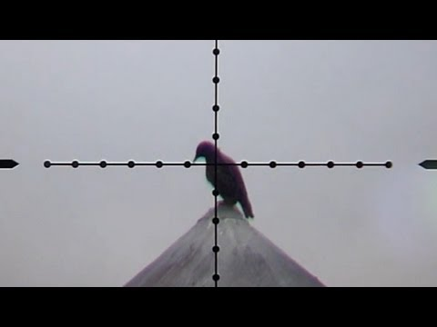 Pest Bird Hunting with Edgun Matador PCP Air Rifle