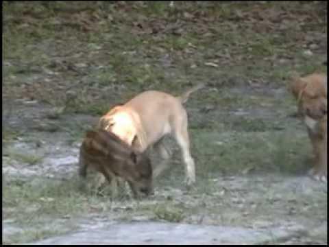 štěňata se učí na seleti ?