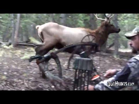 Lov jelena lukem
