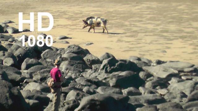 Lov prasat lukem na pláži