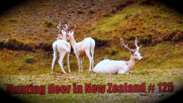 Lov jelenů na Novém Zélandu