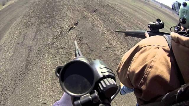 Lov prasat z vrtulníku