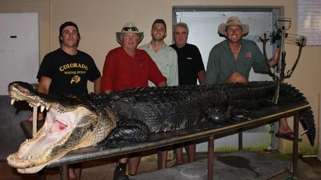Lov aligatora