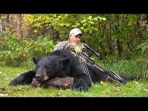 Canada černý medvěd