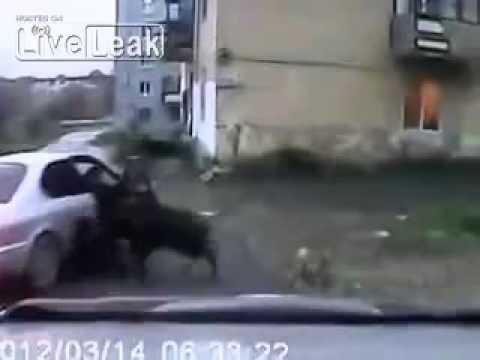 Útok prasete na člověka na ulici