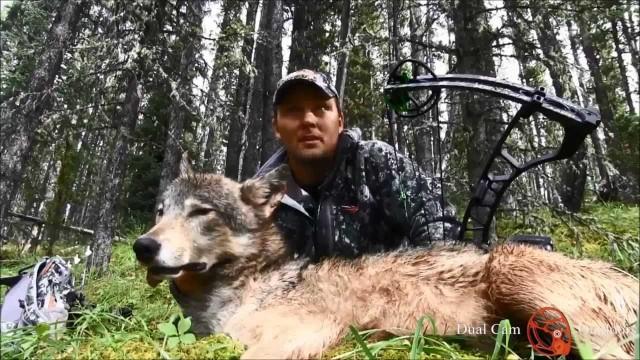 Údolí vlků- lov